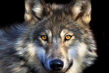 Wolves / wolven / Ulven / Leef als een wolf!