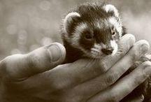 Animal Pics (mostly ferrets) / by blw