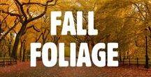 Fall Foliage / Fall Foliage in NYC