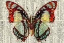 Έντομα-Insects