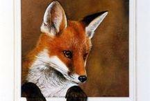 lišky, lišky