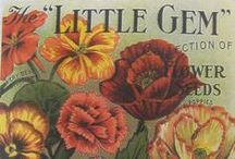 Floral Seed Advertisement / So beautiful !!