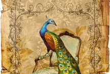 Peacocks / .