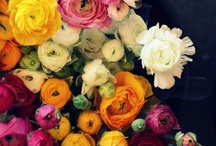 FLOWERS, FLOWERS, AND MORE... / by Terrye Ann Frey