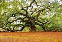 Love my trees