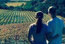 Sonoma Valley Vineyards / by Sonoma Valley Wine