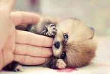 Animal Love ✽