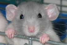 Adorable Rodents