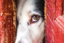 Amigo fiel / Cachorro é tudo de bom! / by lucimar paoli