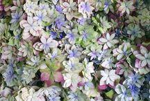 WWW.FOURSISTERS.RU / Moscow Flowers / Plants / Decor /.