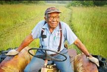 BLACK AMERICAN FARMERS / LOOK AT  BLACK AMERICANS WHO FARM & FEED AMERICA; I grew up on a farm in rural Caroline County, Ruther Glen, Va..my dream is to return back to the farm life...after 30 years living as a city girl...lol / by cynthia ferguson