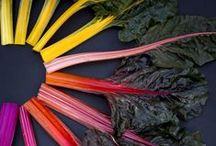 Art + Farm / photographs, art, and sculptures of real food / by Doctored Designs