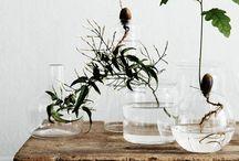 Styling   Plants & flowers