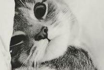 Koteły ^ 3 ^
