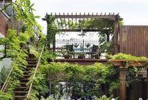 GARDEN / Urban gardens.
