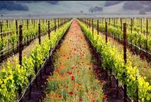 Sonoma Wine Country / by WineCountry.com (Official)