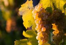 Livermore Wine Country / by WineCountry.com (Official)