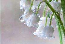 Flowers / Simply beautiful...