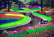 Keukenhof Gardens and Aalsmeer