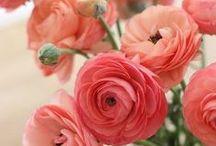 Kvetoucí cukrovata