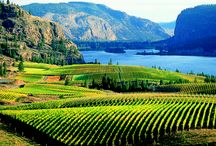 Beautiful Wine Countries Around the World / Travel tips, inspiration and travel guides to the wine countries around the world.