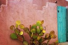 Desert Garden Inspiration / Inspirations for my tiny Southern California drought tolerant cactus and edible garden bird habitat.
