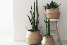 going green / indoor plants