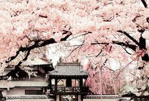 Japan / Japan itineraries, travel tips, inspiration and travel guides.