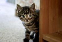 Kitten Care / Starting off kittens for a lifetime of good care!