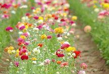 Garden & Outdoors / by Charmaine Clark