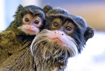 Monkeying Around / Lots of monkeys from around the world ...     At Kawaii Animals we love all animals.  Check out our online store of unusual animal themed toys and gifts.  www.kawaiianimals.com   www.facebook.com/mykawaiianimals   @MyKawaiiAnimals