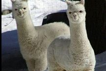 Beautiful Animals / Lots of lovely animals pics ...  At Kawaii Animals we love all animals.  Check out our online store of unusual animal themed toys and gifts.  www.kawaiianimals.com   www.facebook.com/mykawaiianimals   @MyKawaiiAnimals / by Kawaii Animals