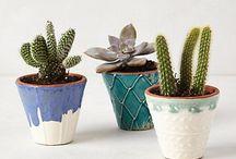 Terrarium & Cactus