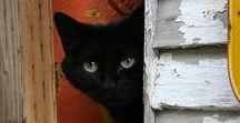 Cats / (=ↀωↀ=)