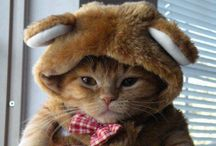 Cats in Hats! / At Kawaii Animals we love all animals.  Check out our online store of unusual animal themed toys and gifts.  www.kawaiianimals.com   www.facebook.com/mykawaiianimals   @MyKawaiiAnimals
