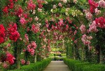 Gardens / Beautiful Gardens