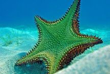 Stunning Starfish / At Kawaii Animals we love all animals. Why not check out our cute animal themed gifts and toys on our website ... www.kawaiianimals.com