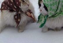 gatos/katzen/Kittens