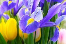 Garden, Flowers, Birds, animals...