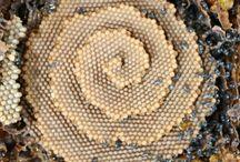 ART-Spiral... Espiral / by Nuceu alves