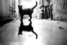 Black Cats / ♥