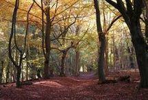 Oxfordshire Nature
