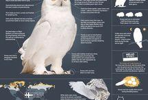 Villmarksnett Infographics