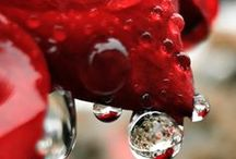 °•○●PHOTOGRAPHY OF WATER DROPS●○•°