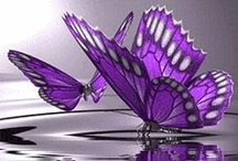 vlinder fladder