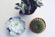 Pflanzen - Plants