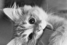 kitty galore