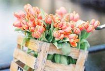Kevät, Spring <3