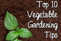 Garden and Compost Tips