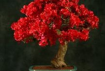 The art of bonsai / by Maria Krenos